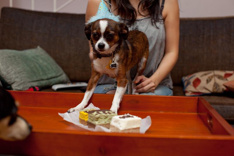 Dog-sushi-halloween2-19.jpg