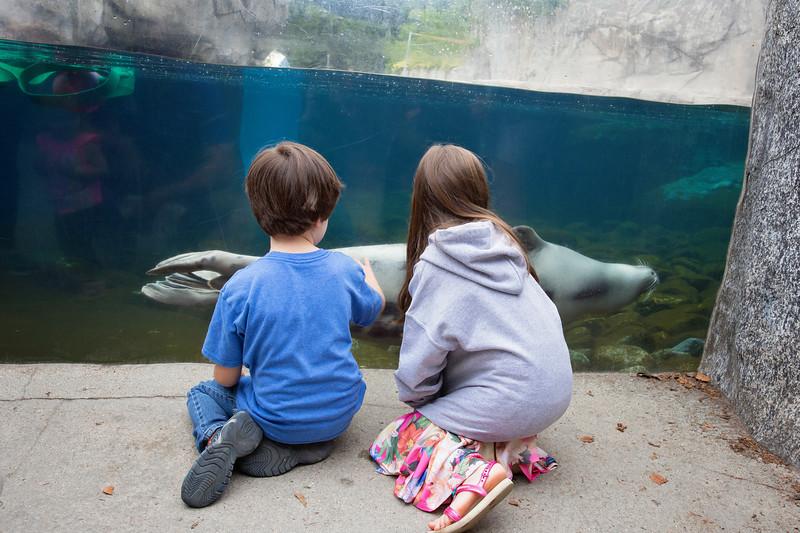 TripAdvisor Mystic Aquarium2-3.jpg