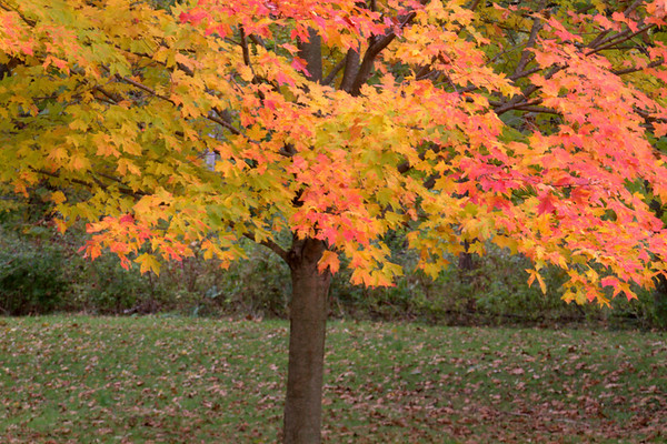 Autumn At Huffman Lake