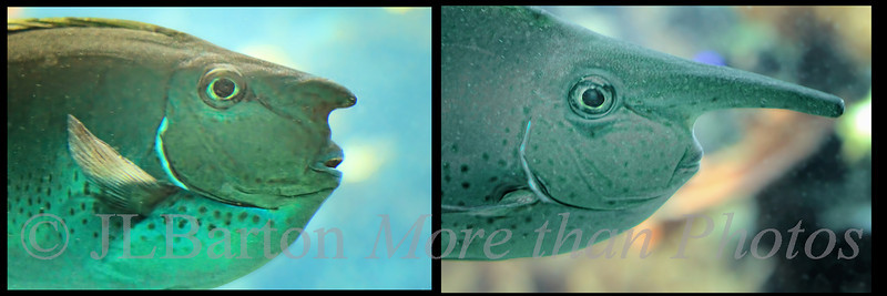 Before and After 2011-08-01  Just a bit of fun.  As seen at the aquarium house at the zoo. Other captions are possible.  Thanks for the generous comments on yesterday's fish picture.  Much appreciated.