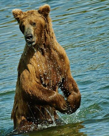New Bears 2018