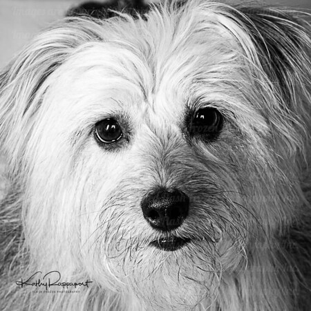 Lola Belle