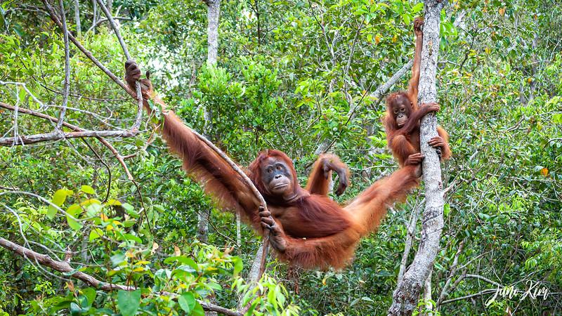 2012.10.07_Borneo_DSC_7092-Edit-Juno Kim.jpg