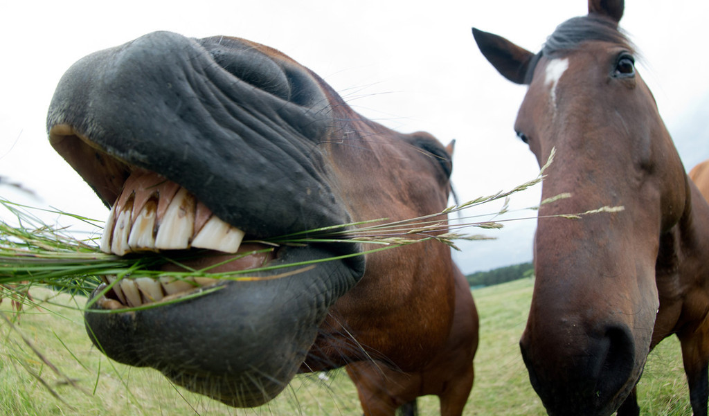 . Horses near Schwarmstedt, central Germany.      AFP PHOTO / DPA / JULIAN STRATENSCHULTE