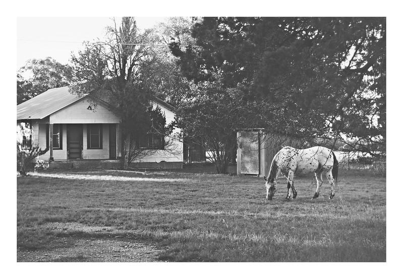 Pokadot and house.jpg