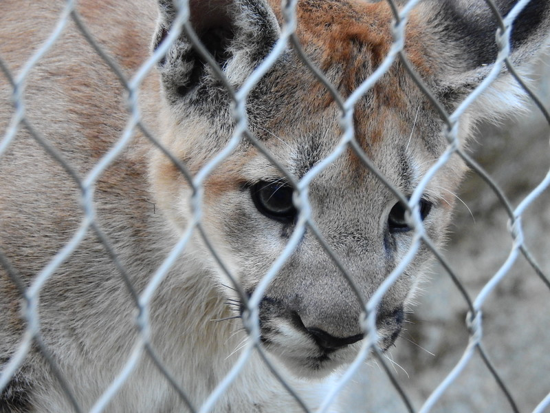 Cheyenne Mtn Zoo 2019 (1209).JPG