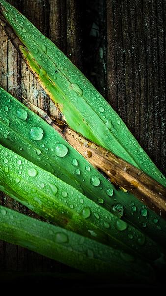 leaf dew.jpg