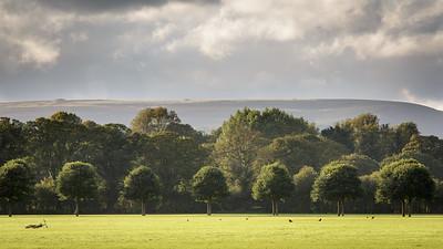 Pontcanna Fields, Cardiff - 12 September 2015