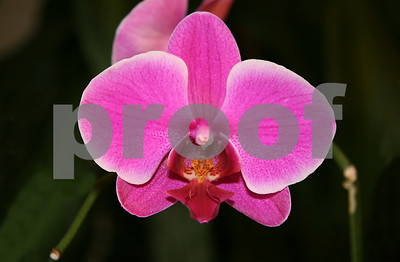 how-orchids-can-become-part-of-your-family