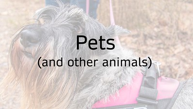 22 Pets and Other Animals