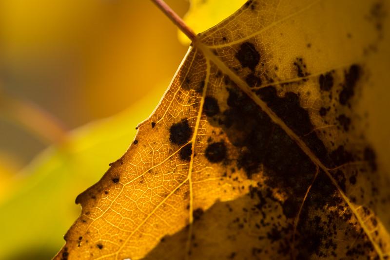 20151024-Fall Colors-16.jpg