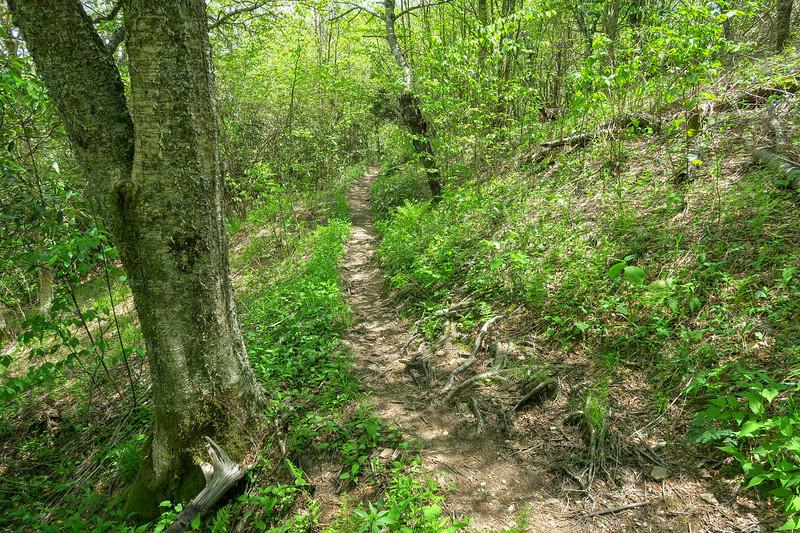 Mountains-to-Sea Trail -- 5,440'