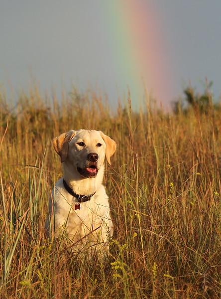Heidi and Rainbow.jpg