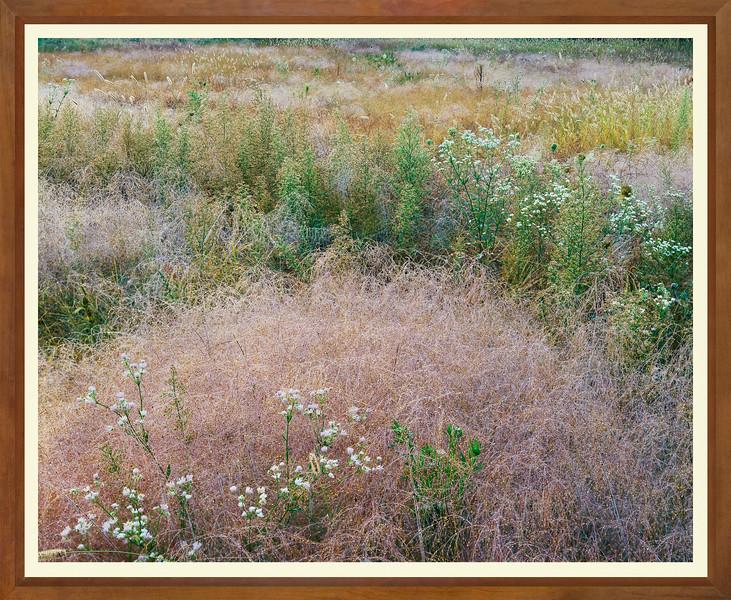 JW 0047 Grass with dew WIDE FRAME.jpg