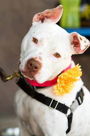 2014 May ARRF Adoption Event