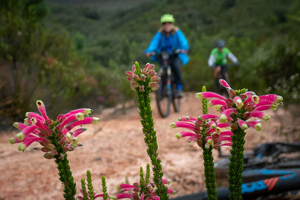 Jonkersberg and Cliffy's Corner Route - George, Garden Route