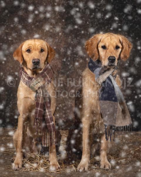 Dogs-4666-EditDrummer Barley Sat Scarf snow.jpg