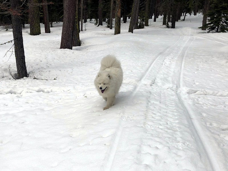 2019-03-21-0023-Trip to Tahoe with Dogs-Lake Tahoe-Teddy the Dog.JPG