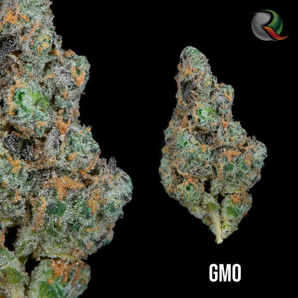 GMOO.jpg