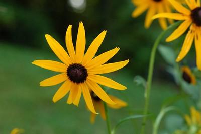 wildflowers of TN