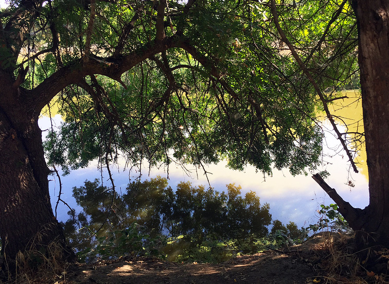 creek reflection.jpg