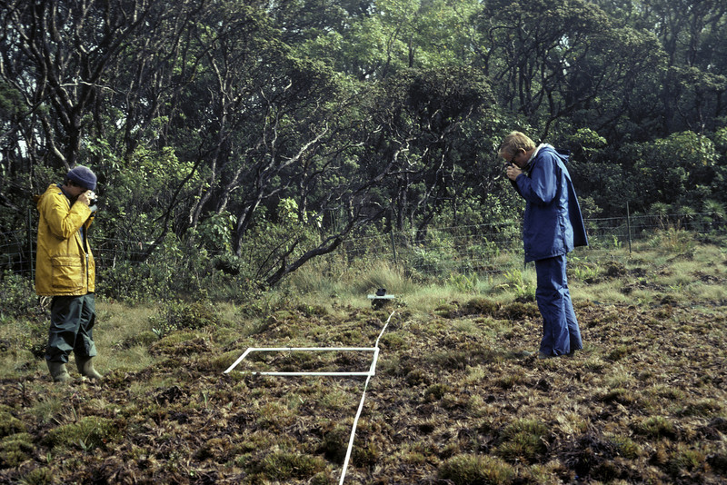 Art Medeiros and Lloyd Loope photographing a meter square quadrant, Greensword Bog; 18 September 1981; phogo by Betsy H. Gagné (photoID: bhg002027)