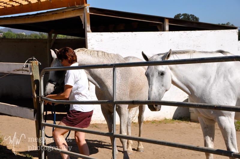 EB&Horses-030.jpg