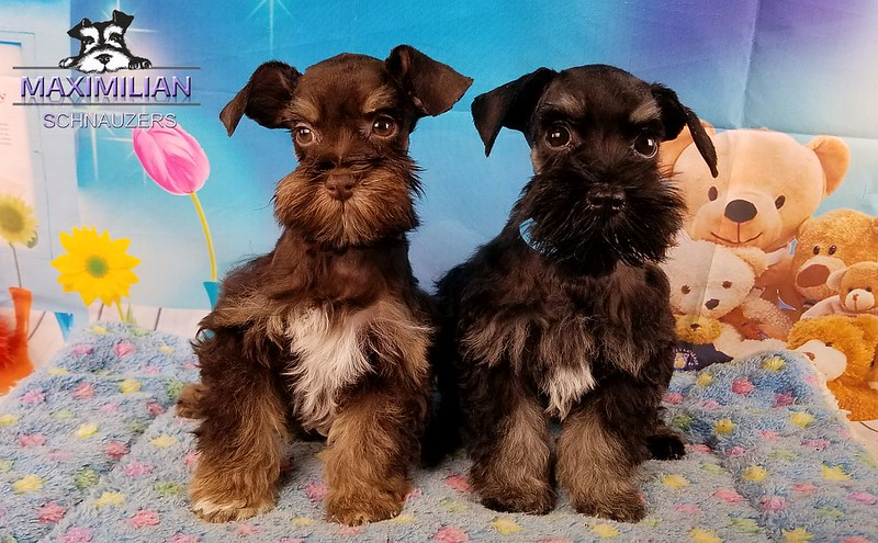 Jodie Pups 007.jpg