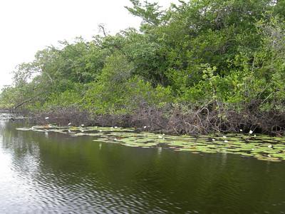 Belize December 2008 - Jen's Nikon Coolpix