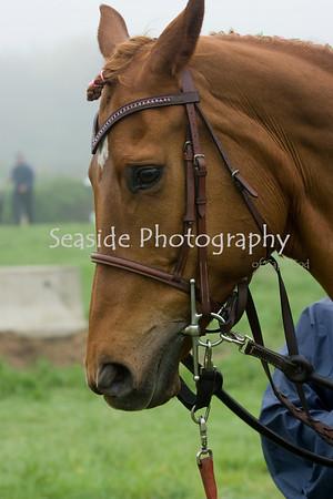Horseshows 2009