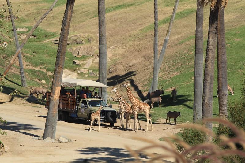 San Diego wild animal pakr 201700054.jpg