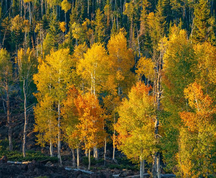 The Aspen of Cedar Mountain in Fall Colors