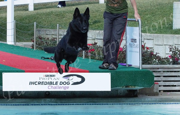 German Shepherd Dog National Specialty 2015 Thursday Dock Diving 10 15 2015