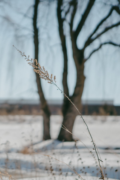 AVS_EcoPreserve_Winter2021-29.jpg