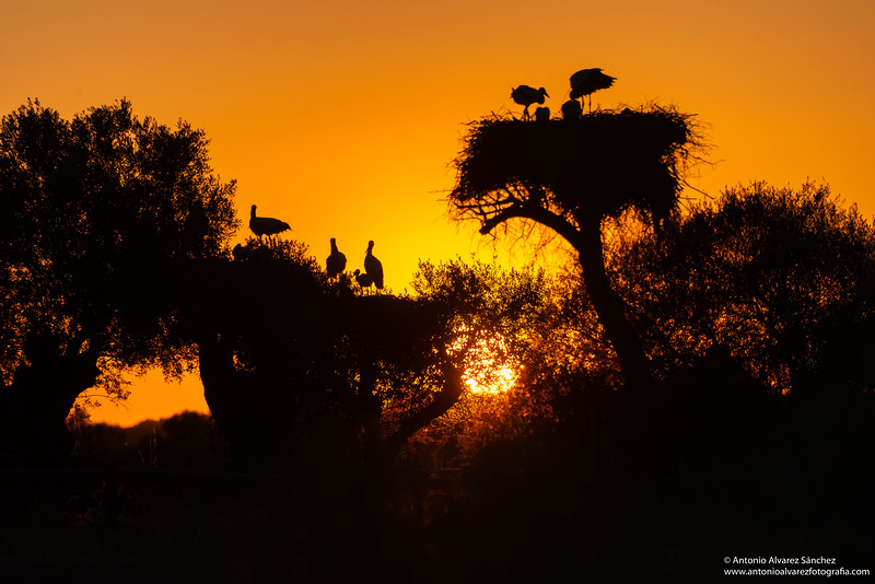Siluetas al atardecer / Sunset silhouettes