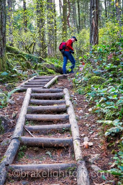 Mt. Finlayson Trail