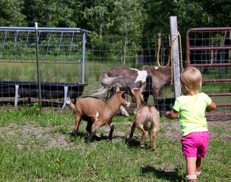 Goats and Pony.jpg