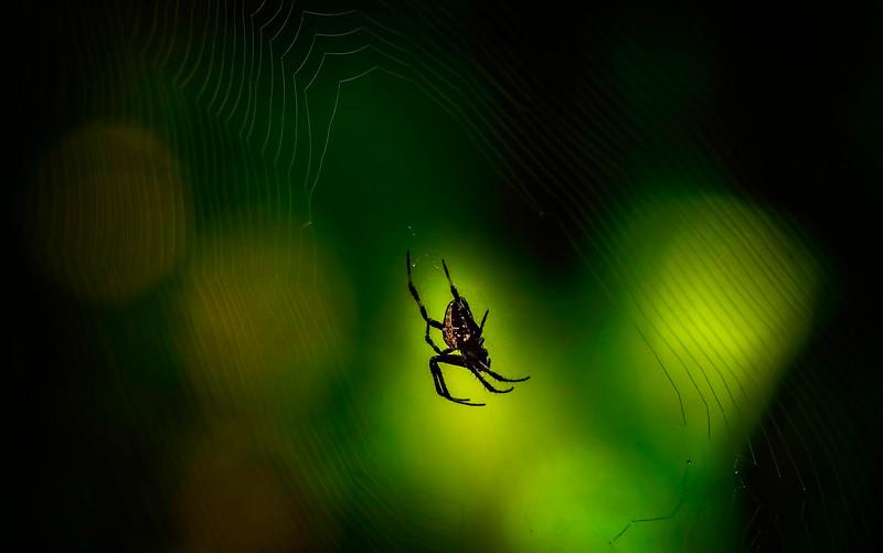Spiders-Arachnids-142.jpg