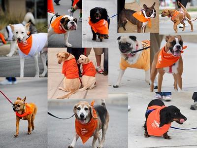 Walk MS: 2010 San Antonio