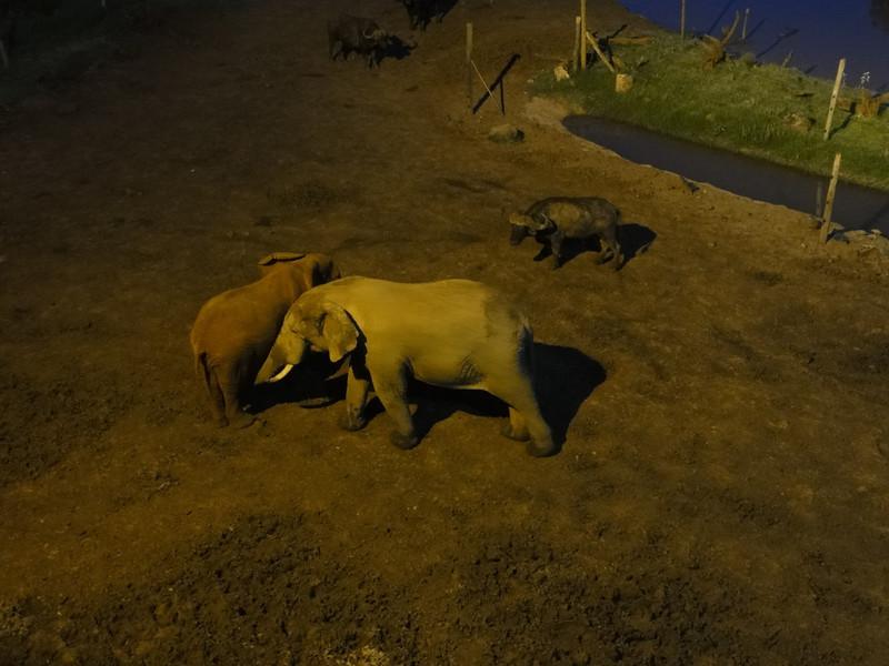 East Africa Safari 81.jpg