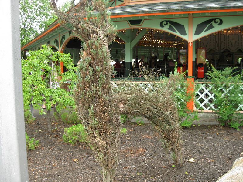Sad-looking topiary in front of the Carousel.