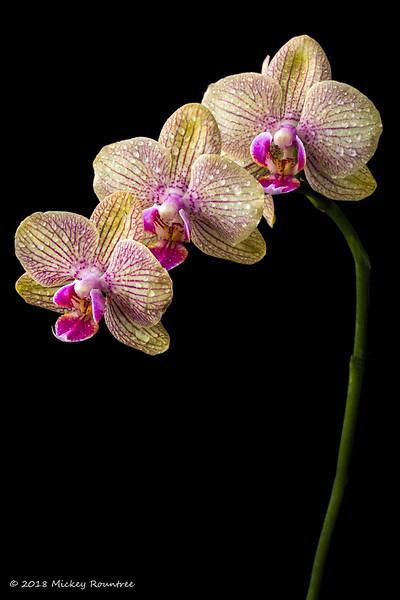 April Orchids