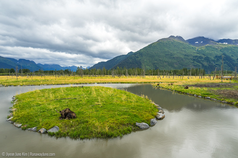 Alaska Wildlife Conservation Center-7945.jpg