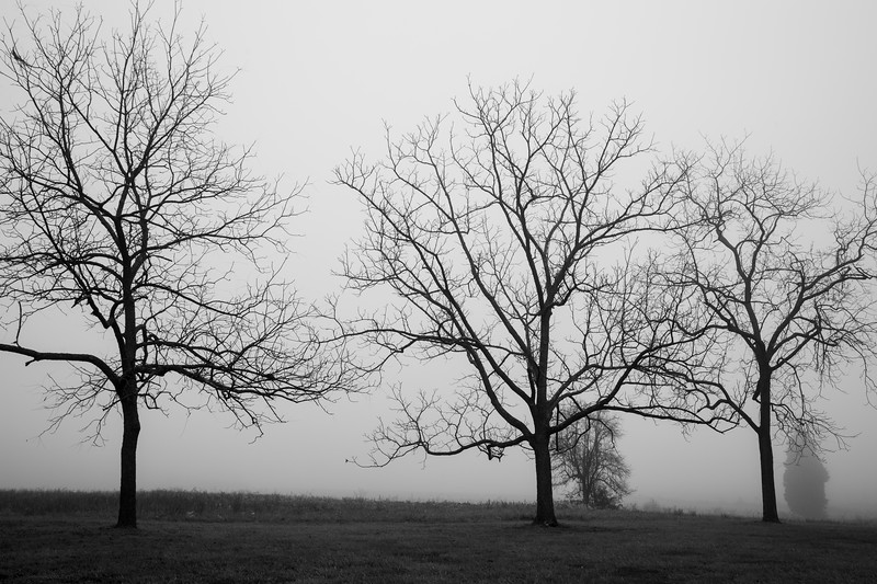 3BWTrees (1 of 1).jpg