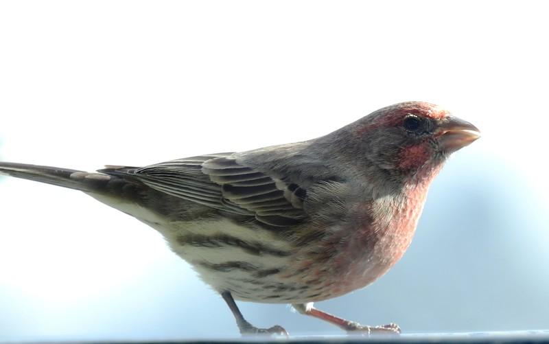 birds (137).JPG