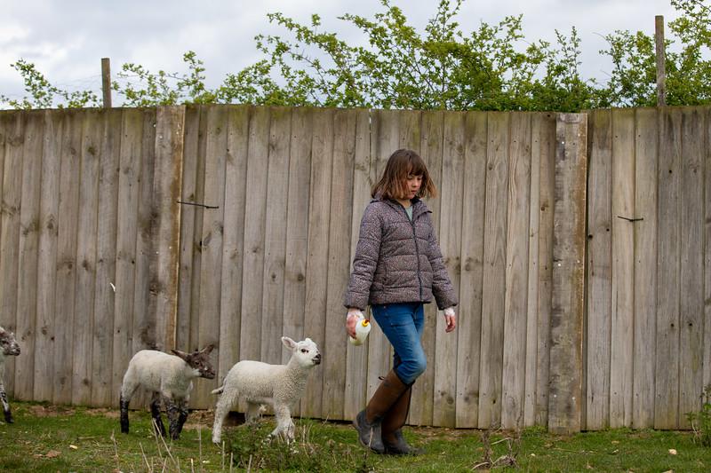 Millie & Lambs