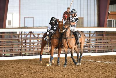 Polo InterActive vs Horsegate