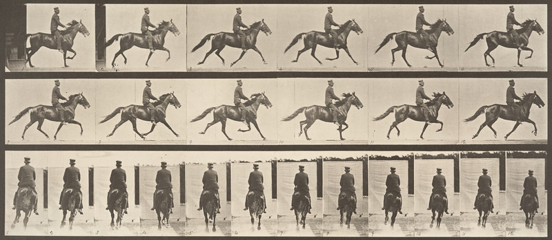 Horse Pronto pacing, saddle back rider (Animal Locomotion, 1887, plate 592)