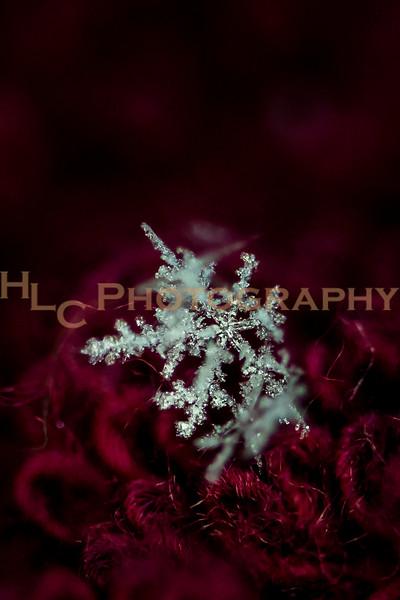030719 Snowflakes