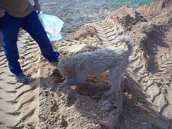 Winnie digging in the sand 2009-11.AVI